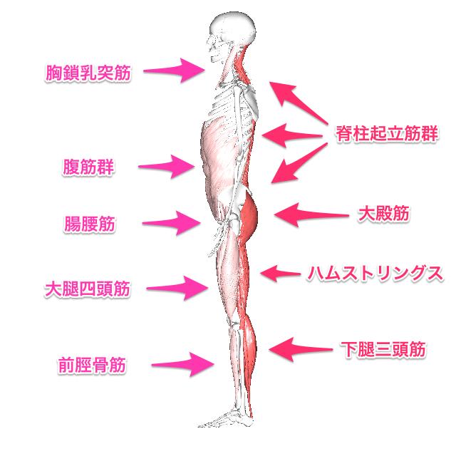 姿勢を支ええる筋肉